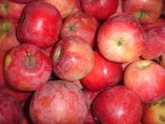 Florin apples wholesale, sale, Vinnytsia
