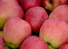 Apples Gloucester, sale, Vinnytsia, Ukraine