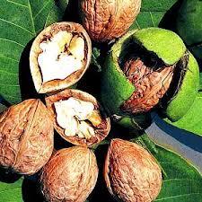 Грецкий орех (Walnut), Украина