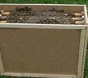 Пчелопакеты  4-х рамочные