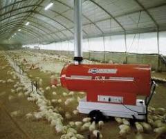 Цыплята подрощенные  породы Адлерская серебристая