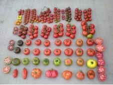 Овощи из Антальи опт