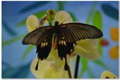 Подарки живые бабочки