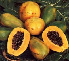 Экзотическое растение Папайя