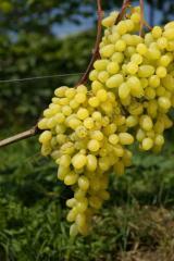 Grade Long-awaited (sultana grape)