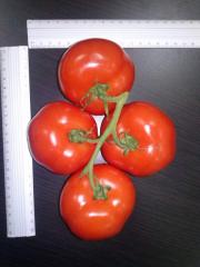 Помідори, томат-гілка заканчился.