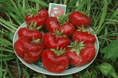 Gigantell's strawberry