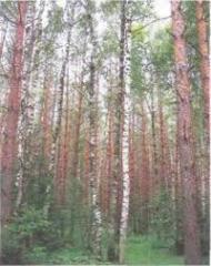 Саженцы деревьев лиственных (с твердой древесиной)