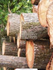 The rounded Ukraine wood