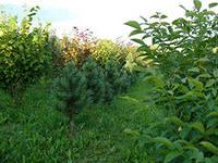 Защита растений химическая