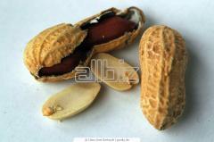 Масло арахисовое оптом