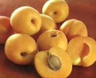 Саженцы абрикоса Июньский ранний