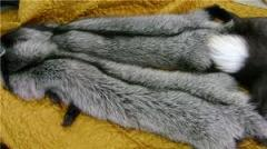 Skins of a silver fox