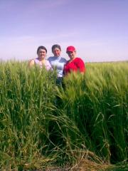 Seeds of summer barley