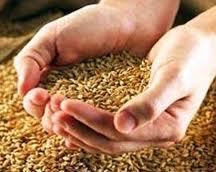 Grano (cereales)