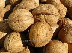Nut in a shell