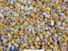 Семена кукурузы Сквира