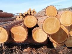 The wood round timber, Bar cylindrical