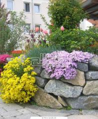 Растения для альпинария,  Альпинарий...
