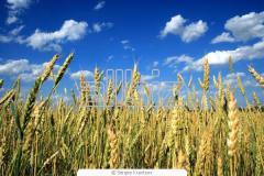 Средства защиты растений. Удобрения и средства
