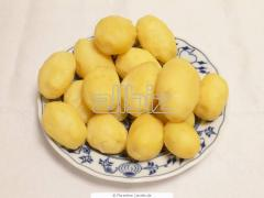 Potatoes superearly, potato the Chernihiv region,