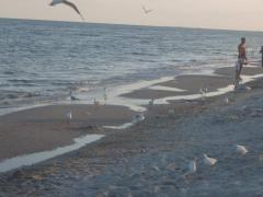 Участок у моря СРОЧНО