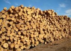 Лес-кругляк, цена, Украина