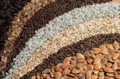 Цены на Семена зерновых культур в Украине
