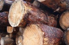 Firewood oak, pine.