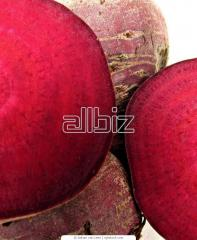 Beet red from the producer. Export is possible.