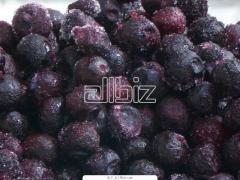 The bilberry frozen from the producer. Export is