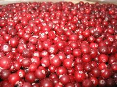The cranberry frozen from the producer. Export is