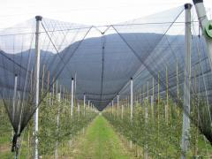 Бетонные столбы для садоводства, продажа, Черновцы, Украина