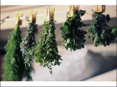 Экстракты-концентраты из растительного сырья.