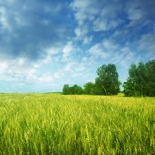 Посевной материал подсолнечник, кукуруза, соя.