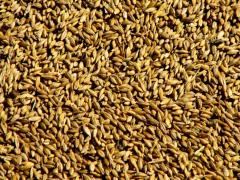 I will buy grain fodder