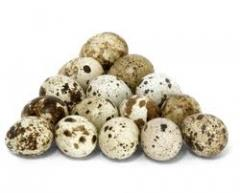 Яйца перепелиные инкубационные, продукты питания