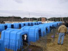 Fiberglass lodges for calfs
