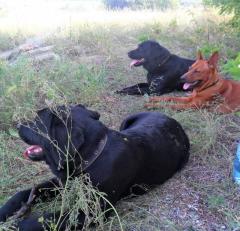 AndaFrelsis - многопородный питомник собак