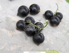 The currant frozen red and black from the