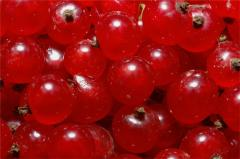 The red currant frozen from the producer. Export