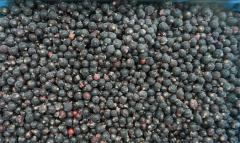 The blackcurrant frozen from the producer. Export