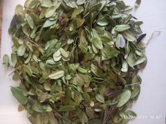 Брусника лист  (Vaccinium vitis-idaea)