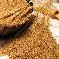 Bran wheat, seedings of 16% of a protein