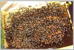 Пчелопакеты Донецк
