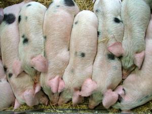 Pork category Extra round
