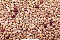 Торговля бобовыми культурами