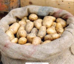 Potatoes wholesale Ukraine
