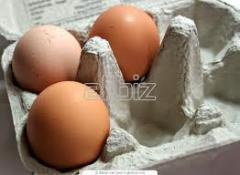 Gofrolotki for eggs, production, production