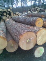 Fansyrye of hard-wooded broadleaved
